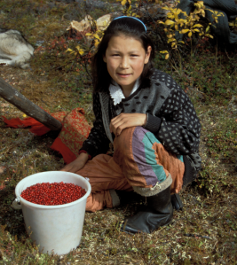 A berry-collecting expedition at the obshchina Kaiettyn.