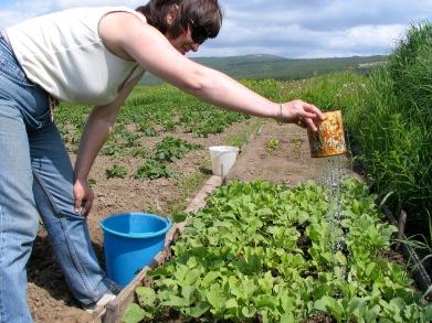 Magadan_Galya watering